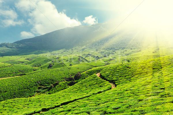 Tè cielo foglia verde montagna Asia Foto d'archivio © dmitry_rukhlenko