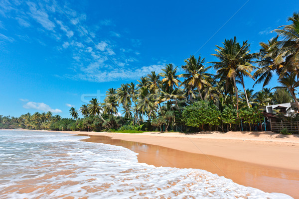 Idyllique plage Sri Lanka tropicales paradis arbre Photo stock © dmitry_rukhlenko