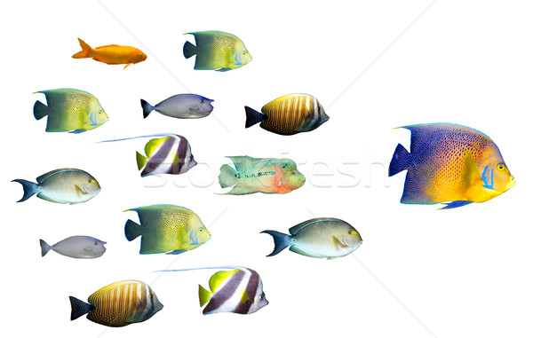Stock photo: Leadership concept - big fish leading school of tropical fishes