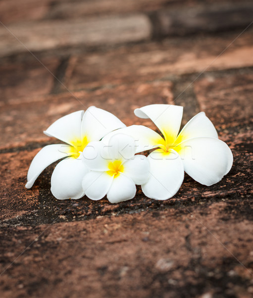 Bloemen drie witte spa ruw stenen Stockfoto © dmitry_rukhlenko