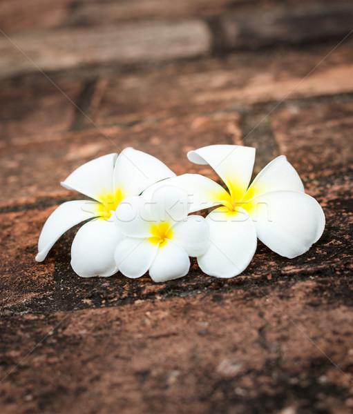 Frangipani (plumeria) flowers Stock photo © dmitry_rukhlenko