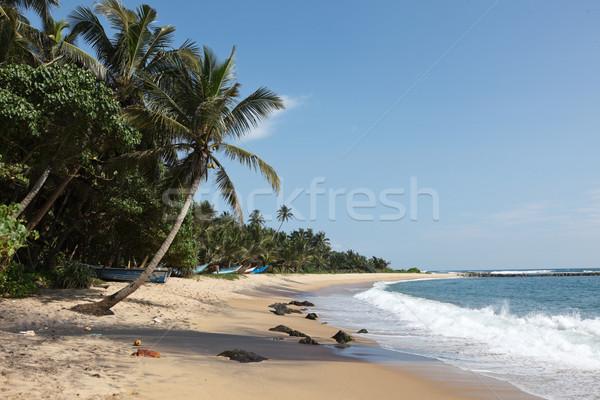 Pastoral plaj Sri Lanka tropikal cennet ağaç Stok fotoğraf © dmitry_rukhlenko