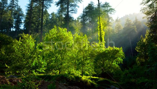 Morning forest with sunrays Stock photo © dmitry_rukhlenko