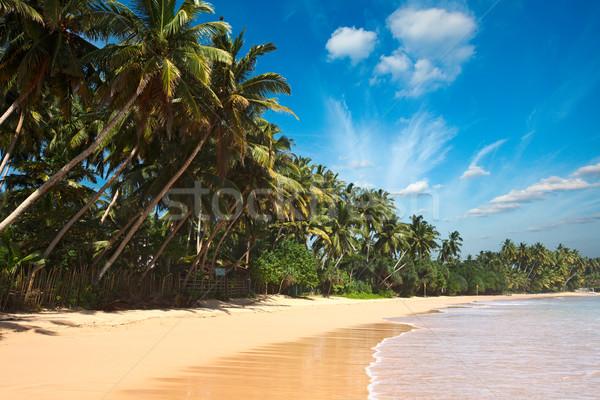 のどかな ビーチ スリ·ランカ 熱帯 楽園 手のひら ストックフォト © dmitry_rukhlenko