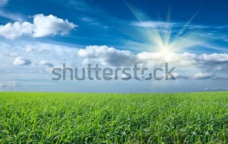 Gün batımı güneş alan yeşil taze çim Stok fotoğraf © dmitry_rukhlenko