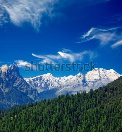 ヒマラヤ山脈 森林 インド ツリー 山 ストックフォト © dmitry_rukhlenko