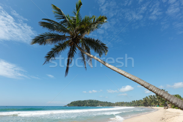 Idyllic beach with palm. Sri Lanka Stock photo © dmitry_rukhlenko