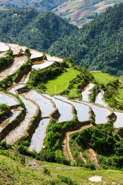 Rice field terraces. Near Sapa, Vietnam Stock photo © dmitry_rukhlenko