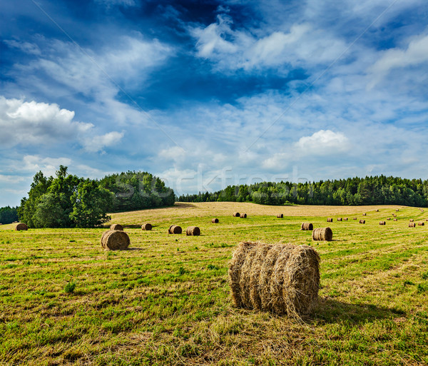 Széna mező mezőgazdaság nyár égbolt természet Stock fotó © dmitry_rukhlenko
