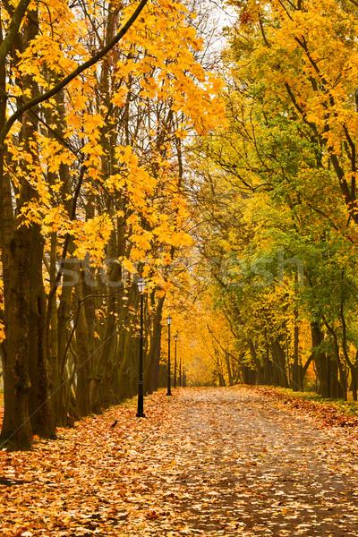 Najaar kleuren park boom bos Rood Stockfoto © dmitry_rukhlenko