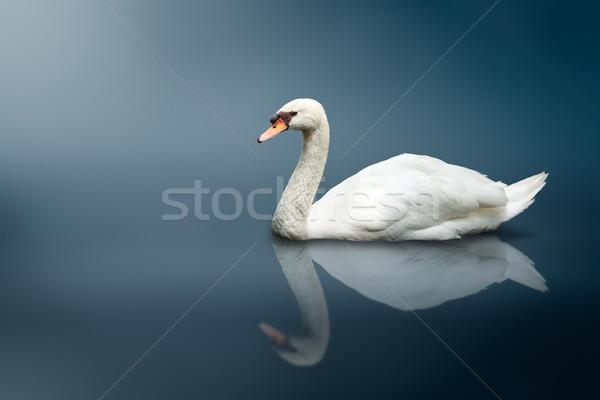Néma hattyú madarak állatok állat konceptuális Stock fotó © dmitry_rukhlenko