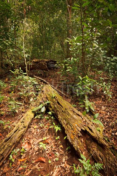 Tropical forest Stock photo © dmitry_rukhlenko