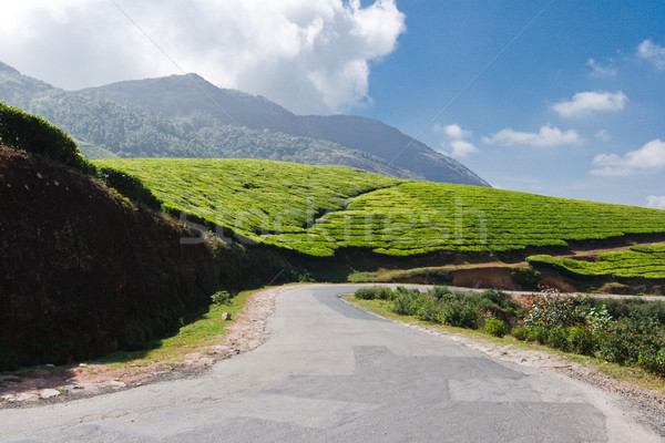 Road in tea plantations Stock photo © dmitry_rukhlenko