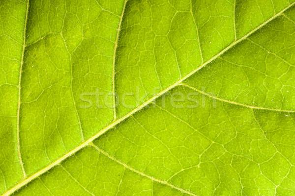 Folha verde verde macro Foto stock © dmitry_rukhlenko