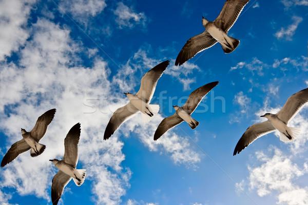 Stock photo: Seagulls flying