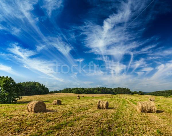 Siano dziedzinie rolnictwa lata niebo charakter Zdjęcia stock © dmitry_rukhlenko