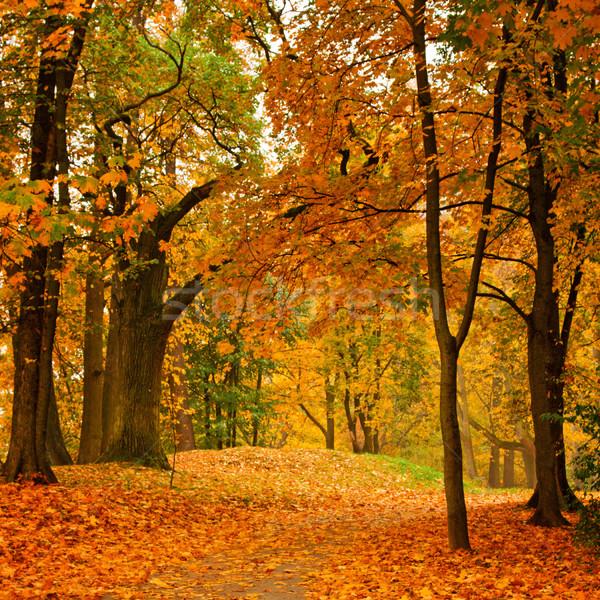 Otono valle parque árbol forestales Foto stock © dmitry_rukhlenko