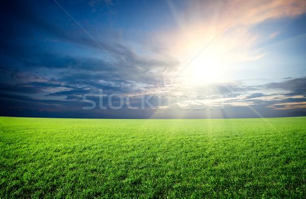 Zonsondergang zon veld groene vers gras Stockfoto © dmitry_rukhlenko