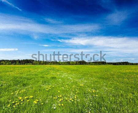 Spring summer background - blooming field meadow Stock photo © dmitry_rukhlenko