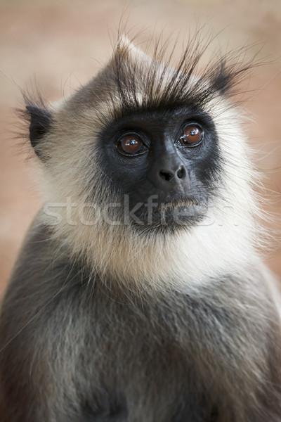 Monkey Stock photo © dmitry_rukhlenko