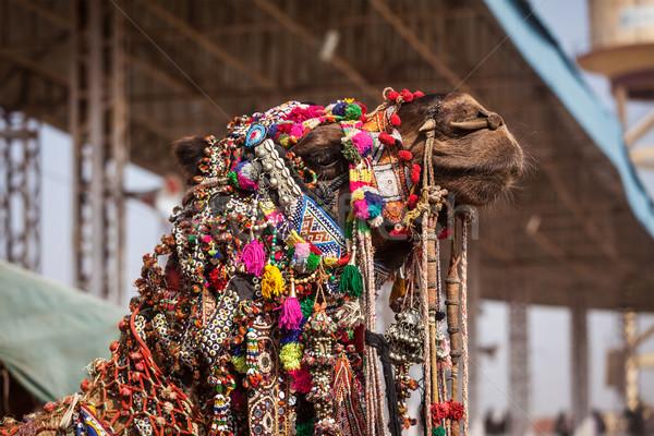 верблюда справедливой Индия украшенный портрет индийской Сток-фото © dmitry_rukhlenko