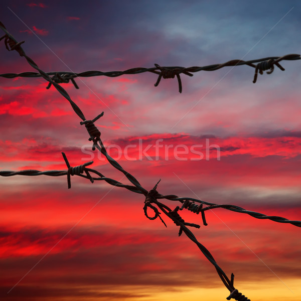 Barbed wire on blurred background Stock photo © dmitry_rukhlenko