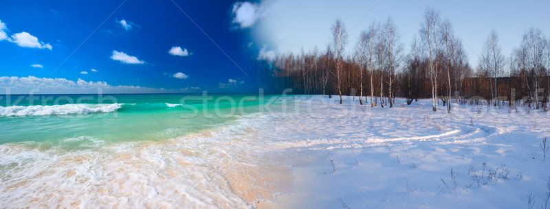 Summer transforming to winter Stock photo © dmitry_rukhlenko