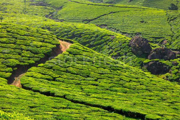 Thee blad groene bergen indian asia Stockfoto © dmitry_rukhlenko