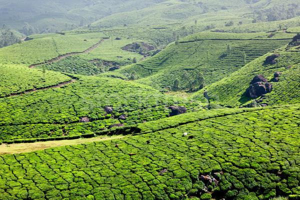 Thé ciel feuille vert montagnes Asie Photo stock © dmitry_rukhlenko