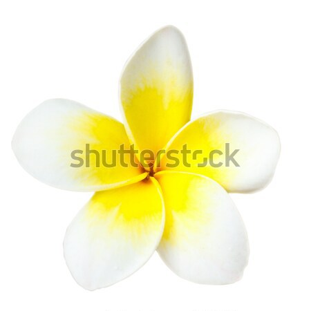 Flor tropical branco isolado flores tropical Foto stock © dmitry_rukhlenko