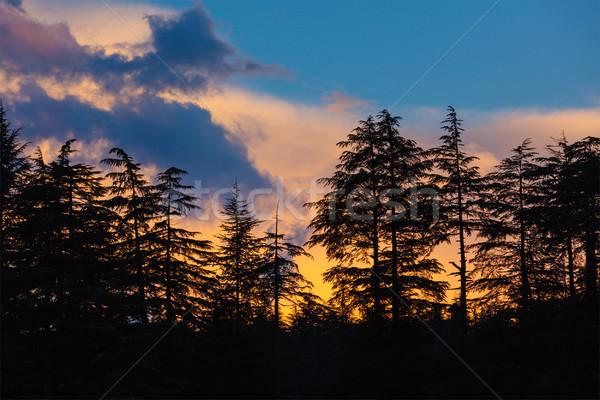 Foto stock: Silhuetas · árvores · pôr · do · sol · árvore · primavera · floresta