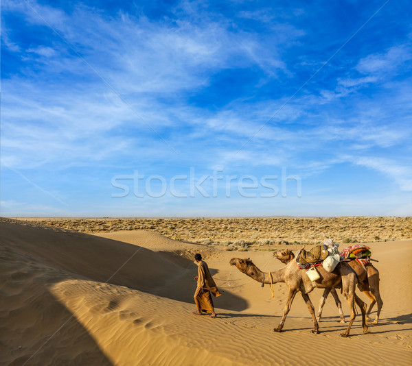 Kameel bestuurder kamelen woestijn reizen Indië Stockfoto © dmitry_rukhlenko