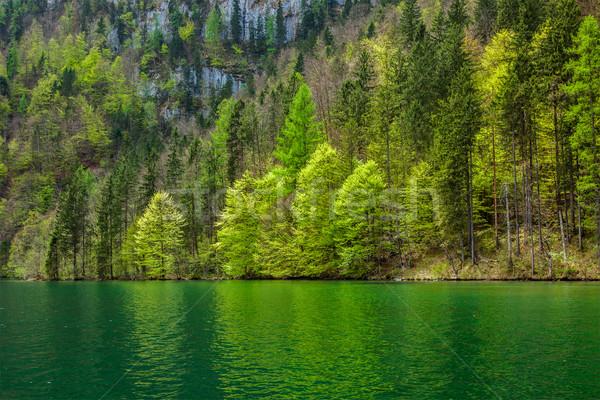 Stock photo: Green trees reflecting in lake
