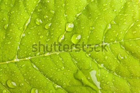 Photo stock: Feuille · verte · macro · eau · vert · usine
