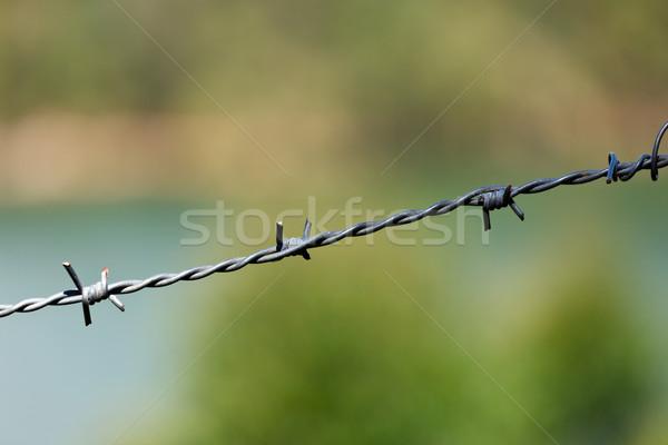 Steel barbed wire Stock photo © dmitry_rukhlenko