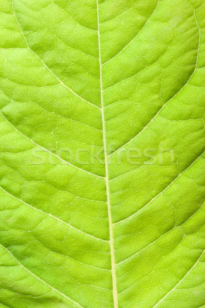 Photo stock: Feuille · verte · vert · usine · macro