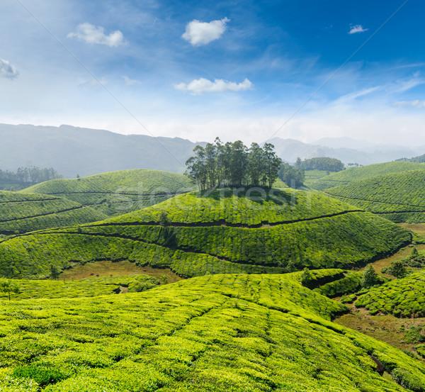 茶 インド 空 葉 緑 山 ストックフォト © dmitry_rukhlenko