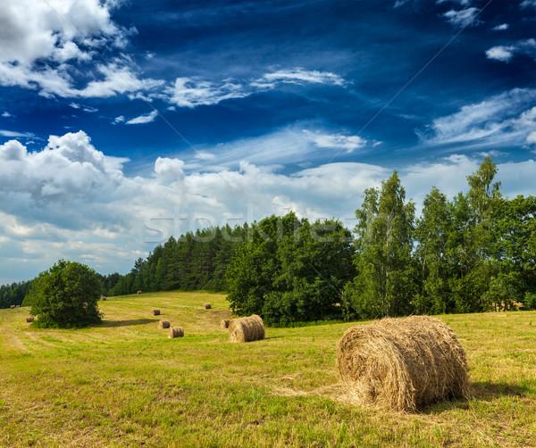 Hooi veld landbouw zomer hemel natuur Stockfoto © dmitry_rukhlenko