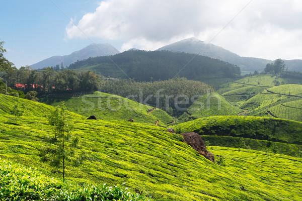 Chá céu folha verde montanhas agricultura Foto stock © dmitry_rukhlenko