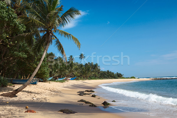 Idyllic beach. Sri Lanka Stock photo © dmitry_rukhlenko