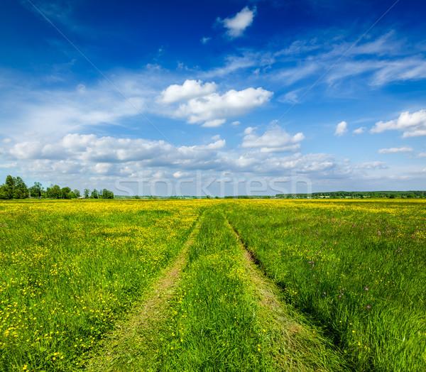 Spring summer - rural road in green field scenery lanscape  Stock photo © dmitry_rukhlenko