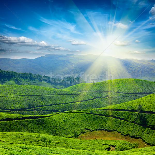 Thee hemel zon blad groene bergen Stockfoto © dmitry_rukhlenko
