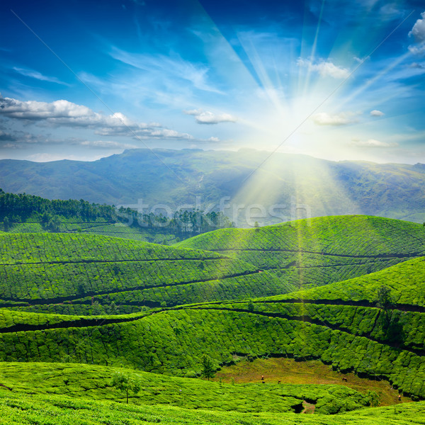 чай небе солнце лист зеленый гор Сток-фото © dmitry_rukhlenko