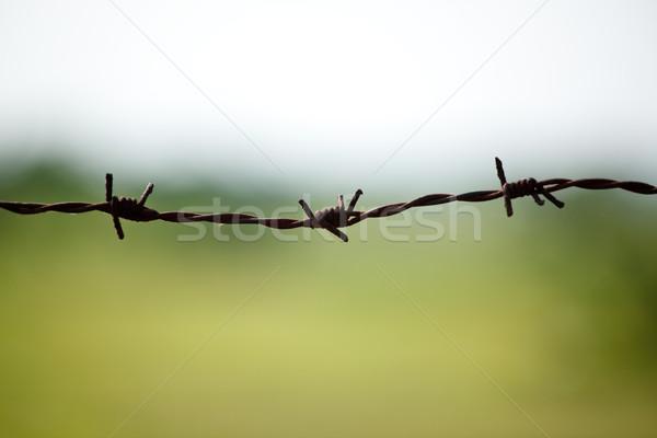 Barbed wire on blurred background Stock photo © dmitry_rukhlenko