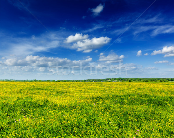 Spring summer background - blooming field meadow Stock photo © dmitry_rukhlenko