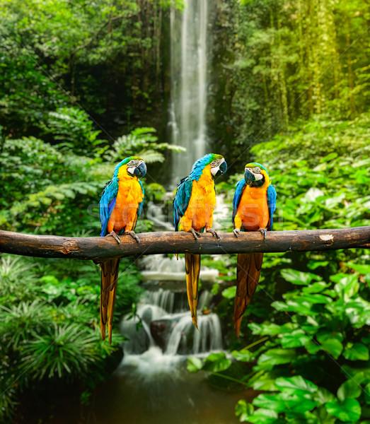 Blue-and-Yellow Macaw Stock photo © dmitry_rukhlenko
