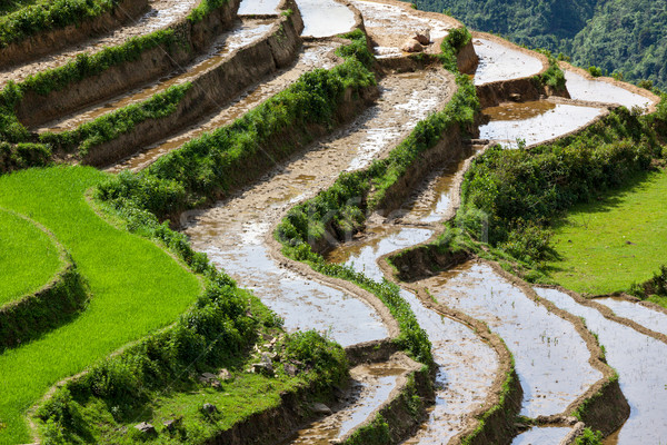 Rice field terraces. Near Sapa, Mui Ne Stock photo © dmitry_rukhlenko