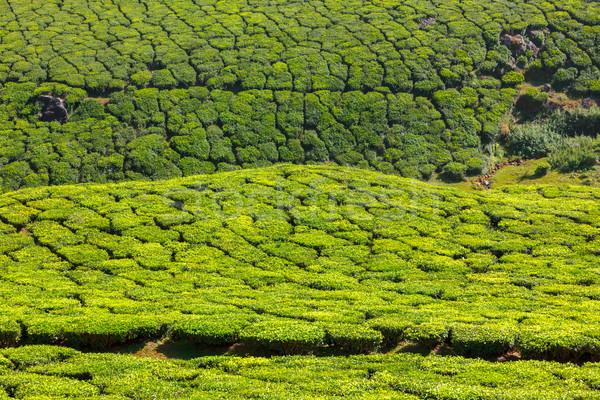 Thé feuille vert montagnes indian Asie Photo stock © dmitry_rukhlenko