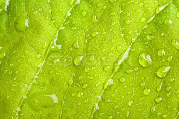 Feuille verte macro eau vert usine Photo stock © dmitry_rukhlenko