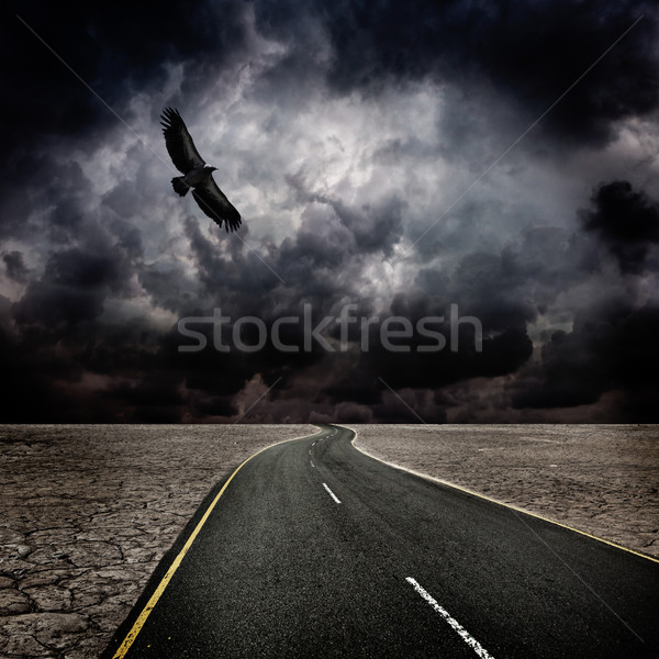 Storm, bird, road in desert Stock photo © dmitry_rukhlenko